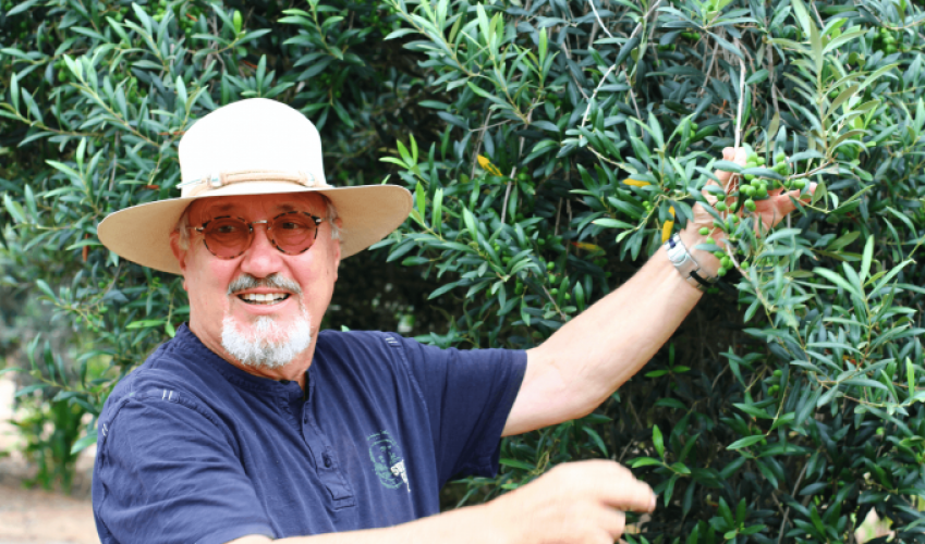 Would you like to know where Lifefood's raw olives come from?