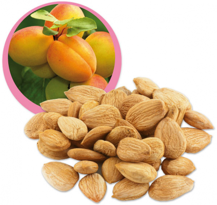 Raw Organic Sweet Apricot Kernels